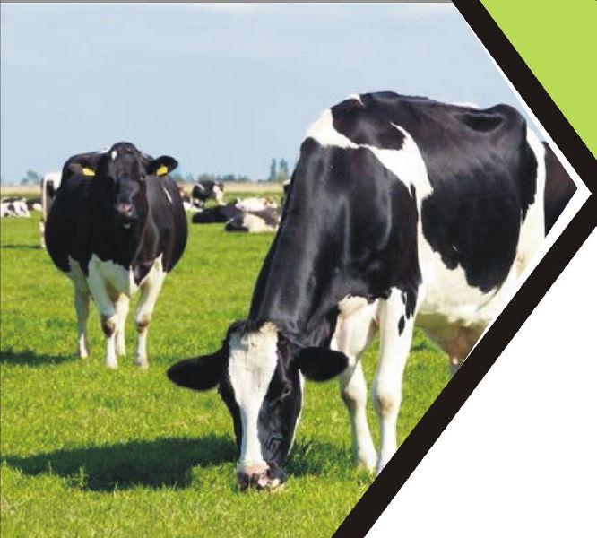 Masti Pro Animal Feed Supplement