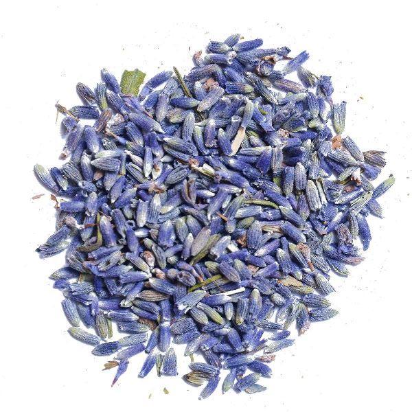 Lavender Flower Buds