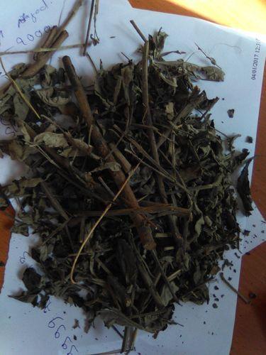 Dried Nirgundi Leaves