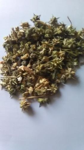 Gokhru Seeds