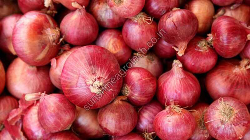 Nashik Red Onion