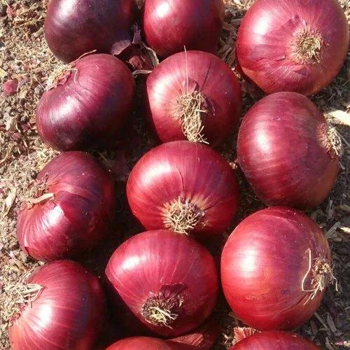 40-60 MM Fresh Red Onion