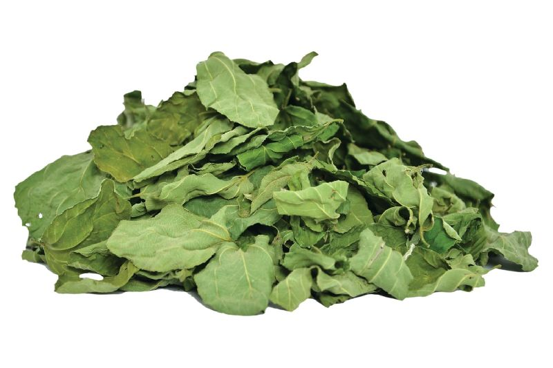 Dried Ziziphus Spina Leaf