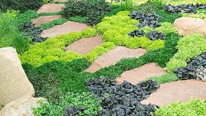 Lawn Ground Covers