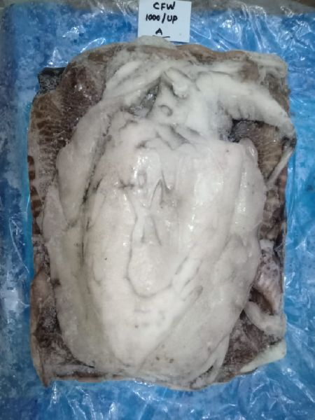 Whole Cleaned Cuttlefish