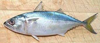 Indian Mackerel Fish
