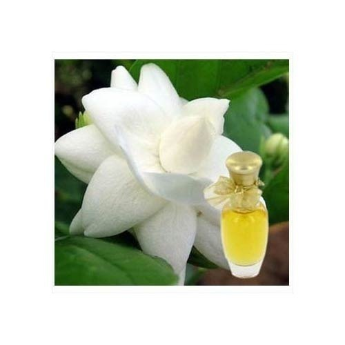 Motia Perfume Fragrance