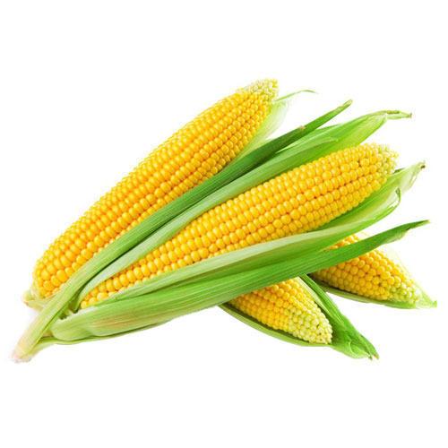 Yellow Corns