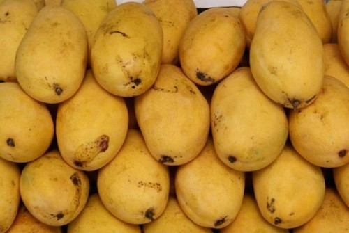 Fresh Safeda Mango