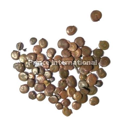 Acacia Catechu Herbal Seeds