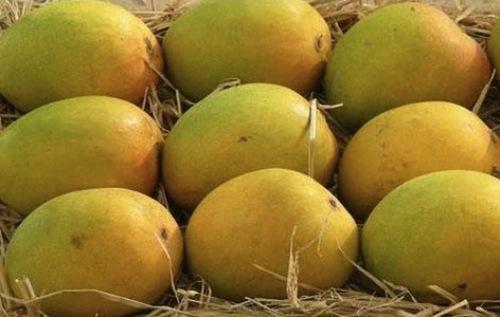 Fresh Pyari Mango
