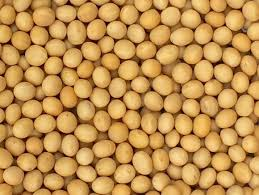 GMO/ Non-GMO Soybean