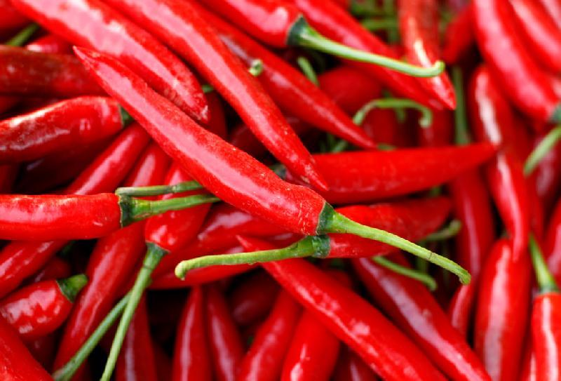 Fresh Chilli Pepper