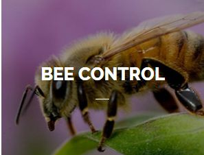 Bee Control Service