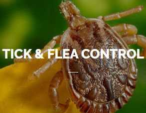 Tick & Flea Control Service