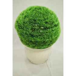 Spear Grass Plants