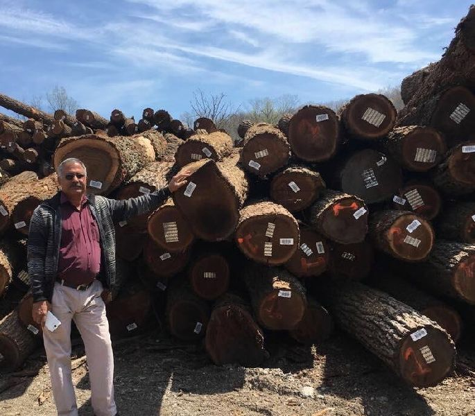 Walnut Wood Logs 06