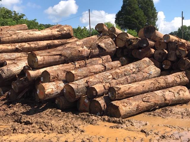 White Oak Log 01