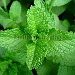Mint Fragrance