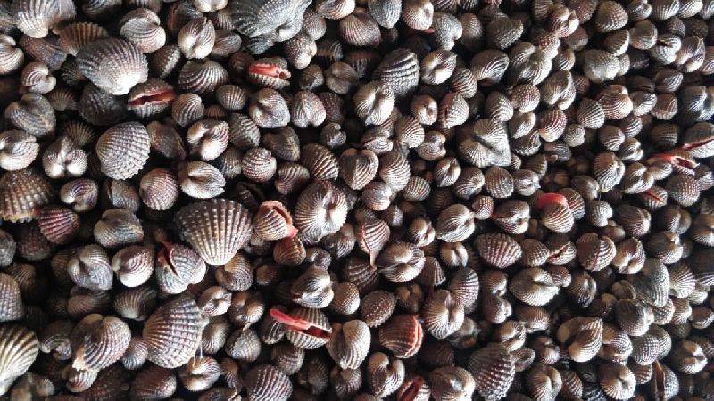 Blood Clam