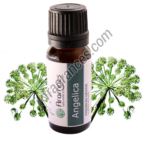Natural Angelica Seed Oil