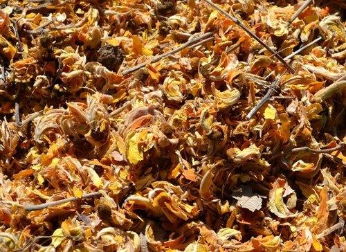 Dried Tesu Flower