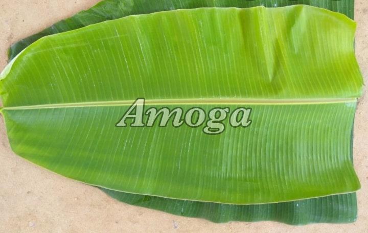 Fresh Banana Leaf