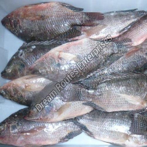 Frozen Tilapia Fish