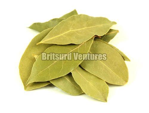 Dry Bay Leaf