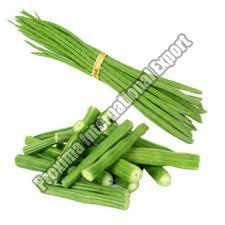 Green Moringa Beans