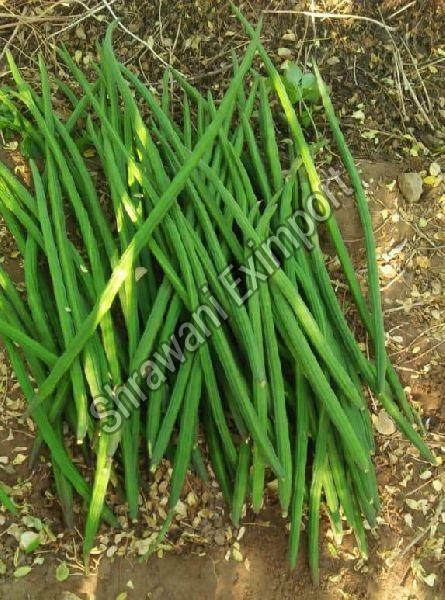 Fresh Organic Drumsticks