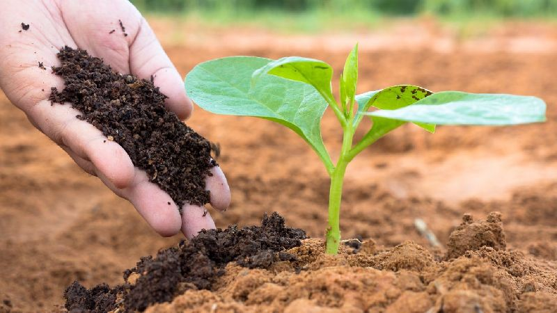 Vermicompost Fertilizer