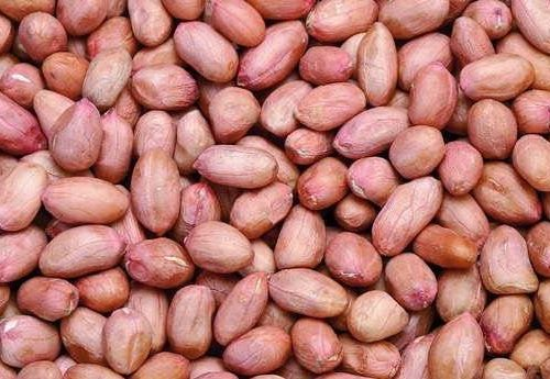 Bold Groundnut Seeds