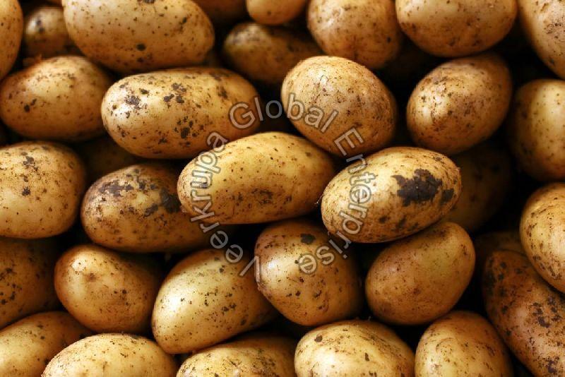Fresh Organic Potato