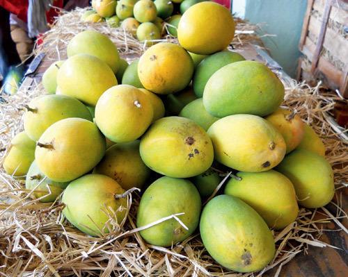 Devgad Alphonso Mango