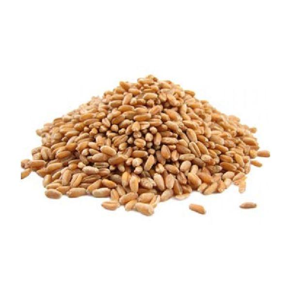 Premium Quality Wheat Grain