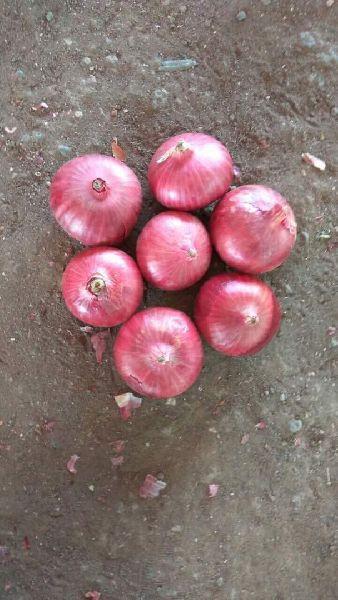 Fresh Dark Pink Onion