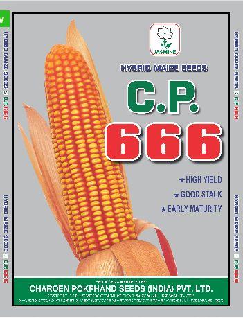 C.P. 666 Hybrid Maize Seeds