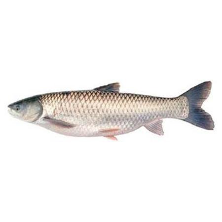 Mrigal Fish Seeds
