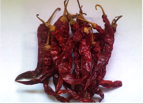Wrinkle 273 Dry Red Chilli