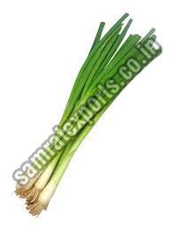 Fresh Green Onion