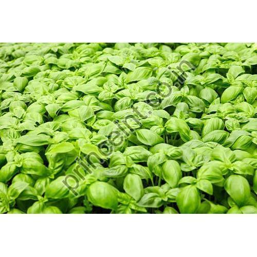 Akadandu Herbal Seeds