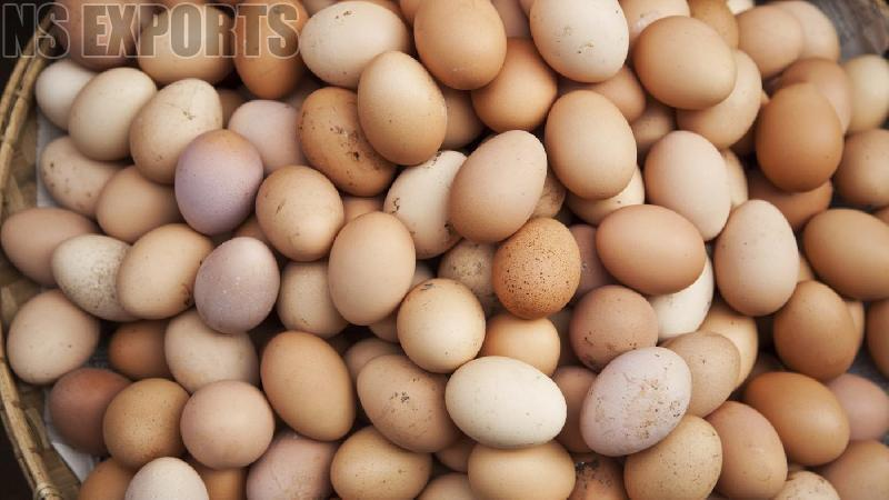 Poultry Eggs 01