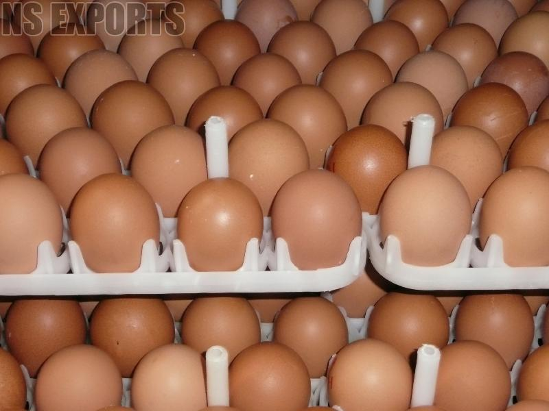 Poultry Eggs 02