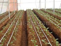 Polyhouse Irrigation System
