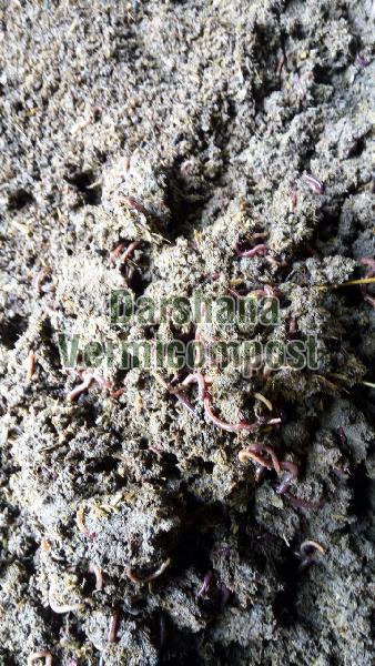 Earthworms 02