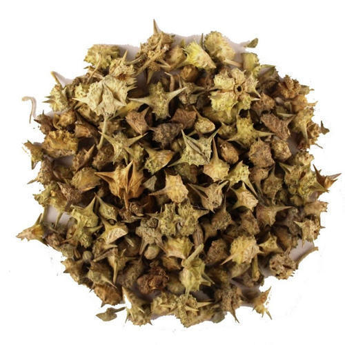 Gokhru Herbs