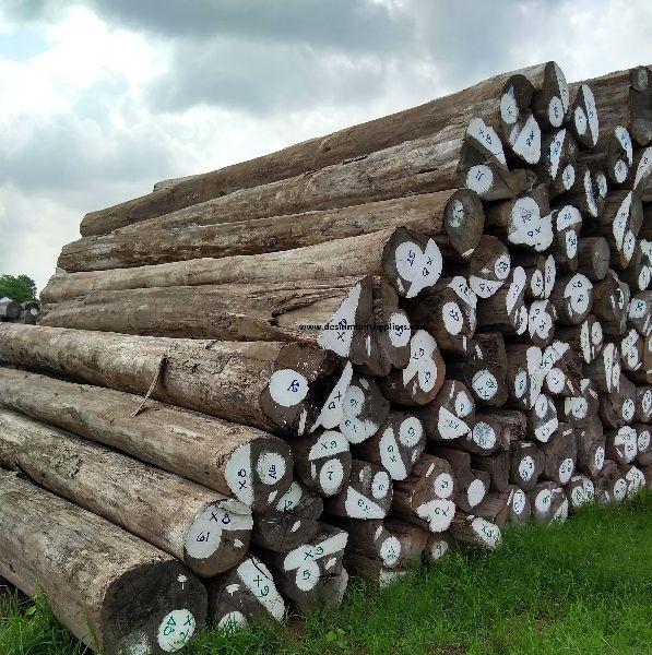 Burma Teak Wood Logs