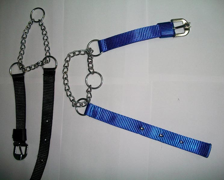 Dog Collars 05