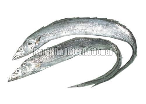 Frozen & Fresh  -Chilled Ribbon Fish
